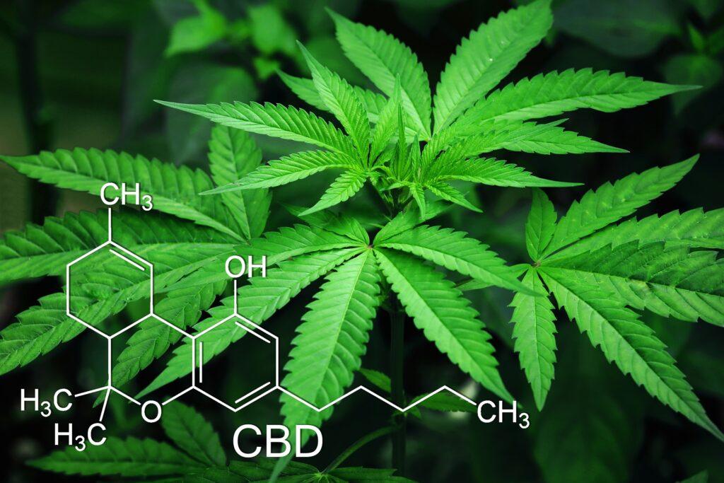 cannabis-light